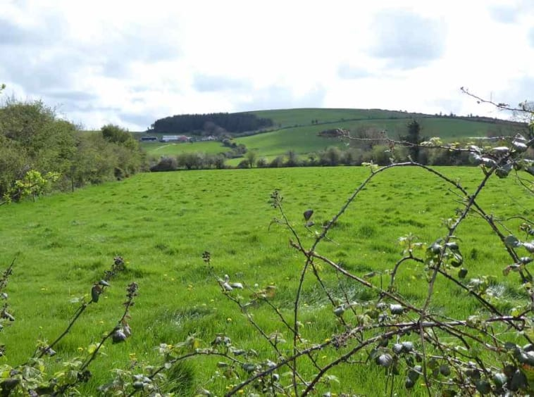 farm for sale ted sheehan auctioneers Co. Cork