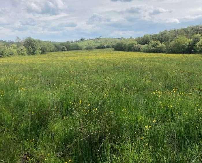 28 acre farm for sale Desmond Wynne Auctioneer