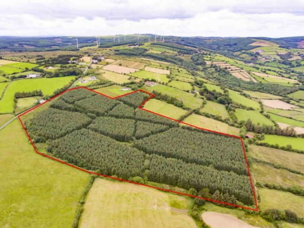 29.7 Acres Forestry Land Liam Mullins & Asscoiates