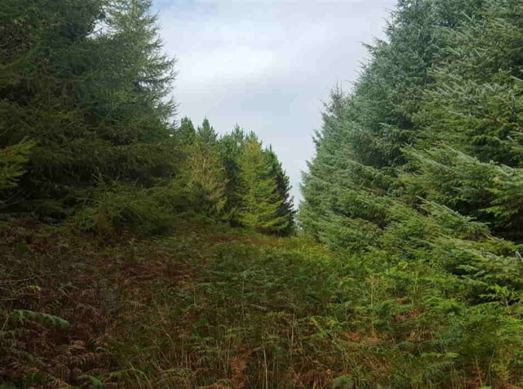 forestry land for sale REA McCarrick & Sons