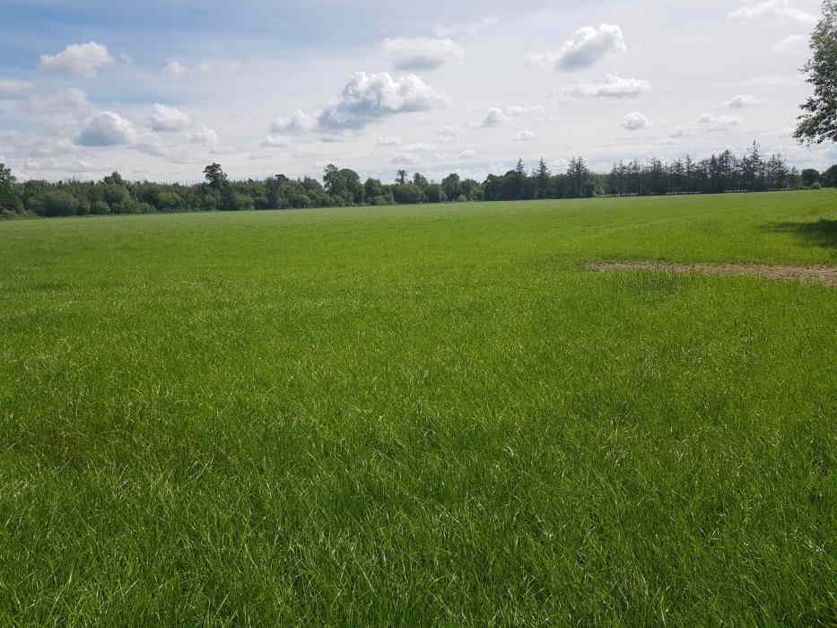 For sale 31 Acre Farm Land Modeshill, Mullinahone, Co. Tipperary Barry & Lynch