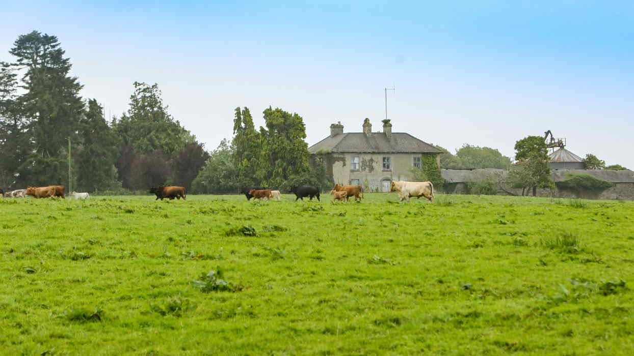 Public Auction Cooleeny House On 191 Acres Agricultural Farm Land James L. Murtagh