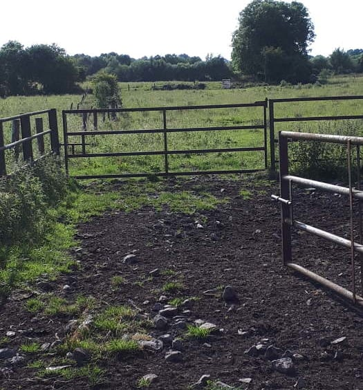 For Sale Pat Gavin Auctioneer: 54 For Sale Acre Non Residential Farm Holding (Incl. Forestry Plantation)