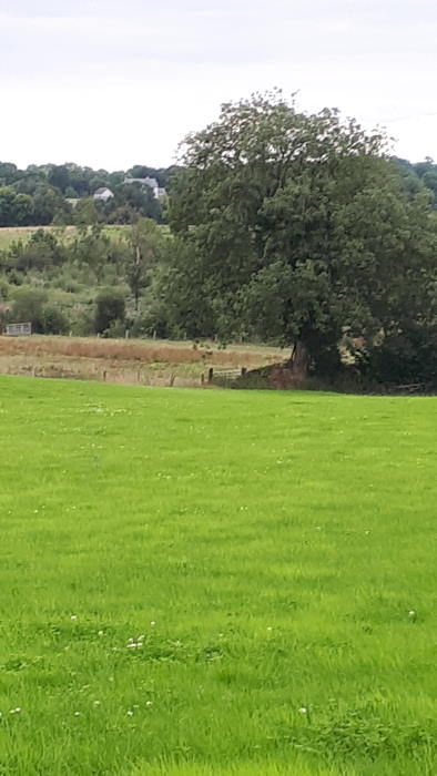 On The Market from Pat Gavin Auctioneer: Excellent Quality 37 Acre Non Residential Farm