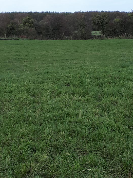 On The Market from Pat Gavin Auctioneers: 13 Acre Agricultural Farm Castlelost West, Rochfortbridge, Co. Westmeath