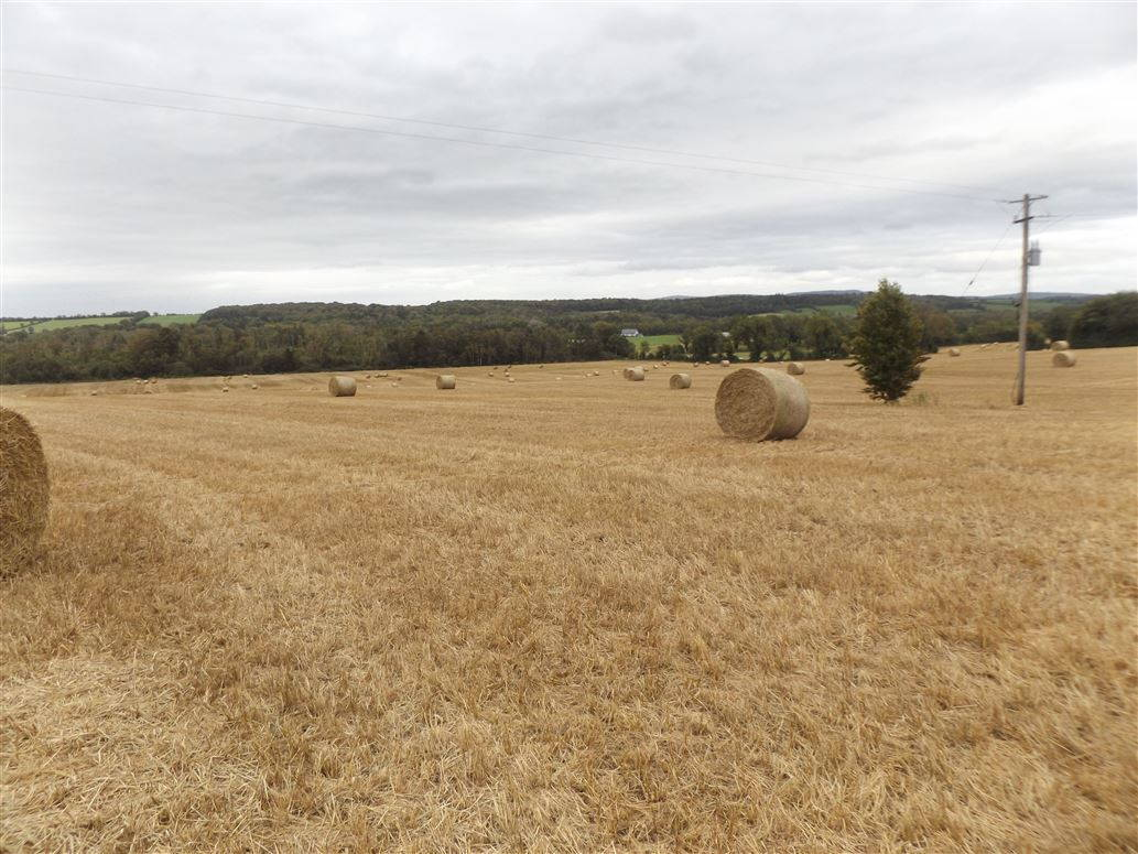 On The Market From REA Seamus Browne: 33.5 Acres Of very Productive Tillage Land With Good Road Frontage