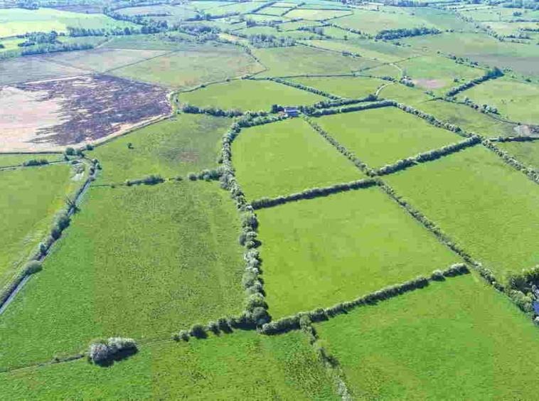 Public / Online Auction by James L. Murtagh Auctioneers; Good Quality 55 acre Residential Farm (Traditional Farmhouse). Available in Lots. James L. Murtagh Auctioneers are delighted to offer for sale by public auction this c.55-acre residential farm at Annagh, The Pigeons to the market.